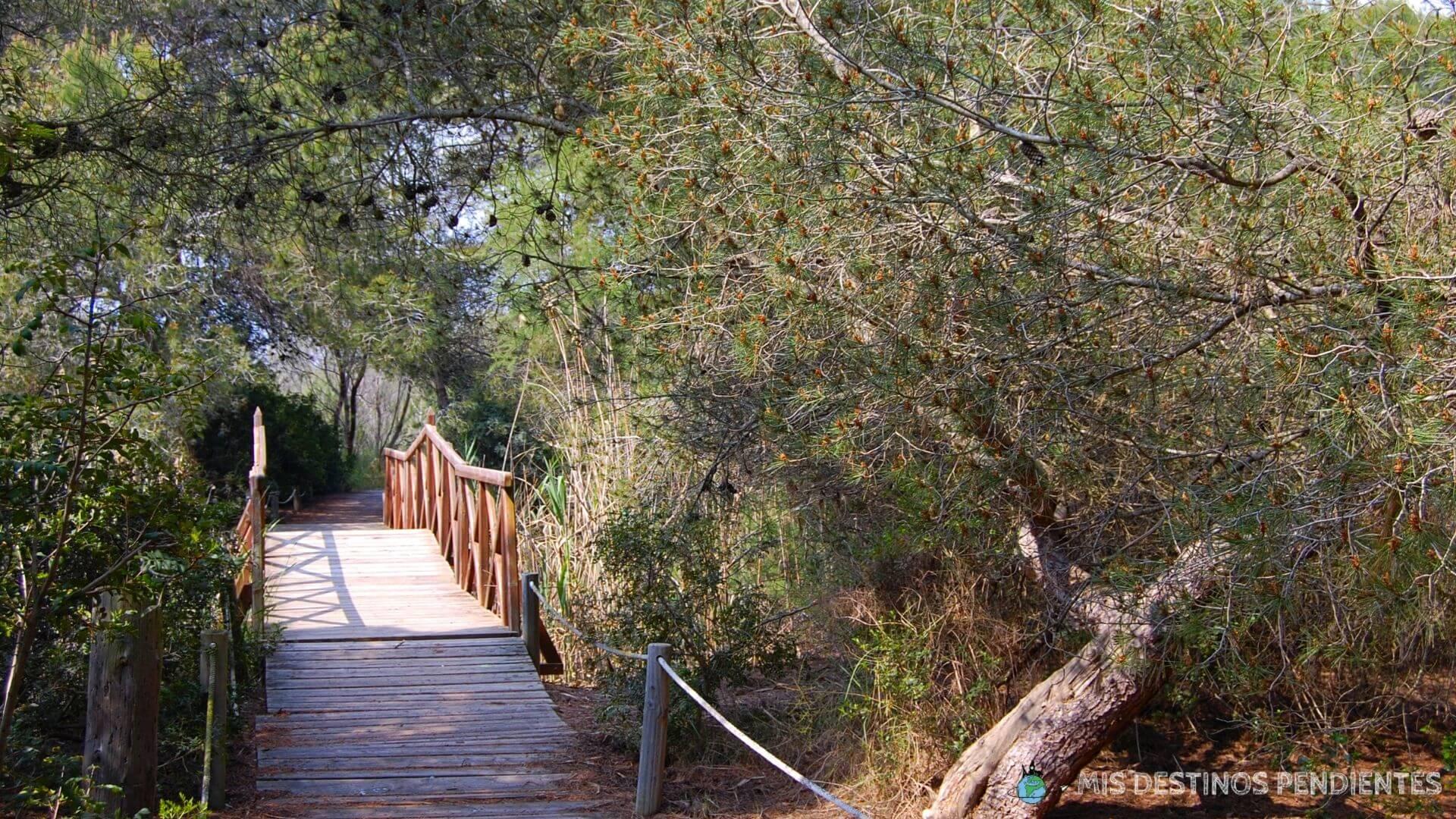 Bosque de la Devesa de l'Albufera (Valencia, España)