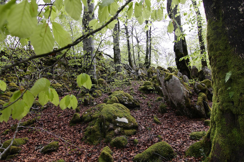 Selva de Irati (Fotografía cedida por Gobierno de Navarra)