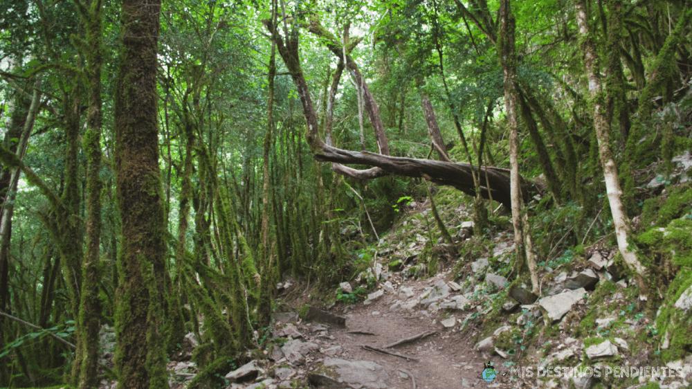 Bosque del Cañón de Añisclo (Vió, España)